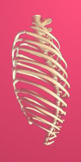 breastbone harp